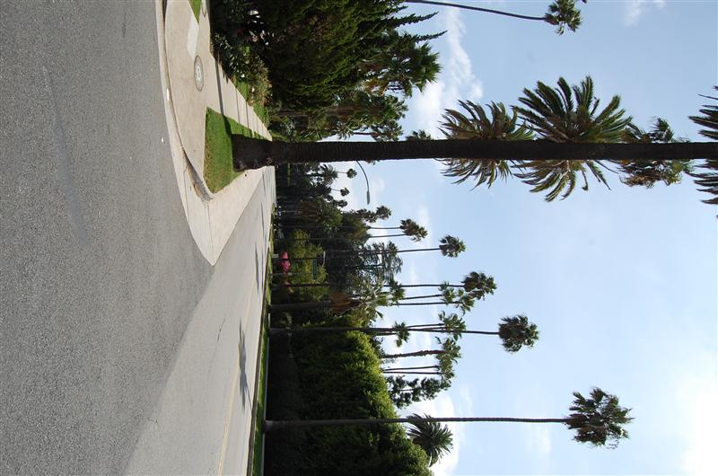 Photo from Los Angeles CA, United States