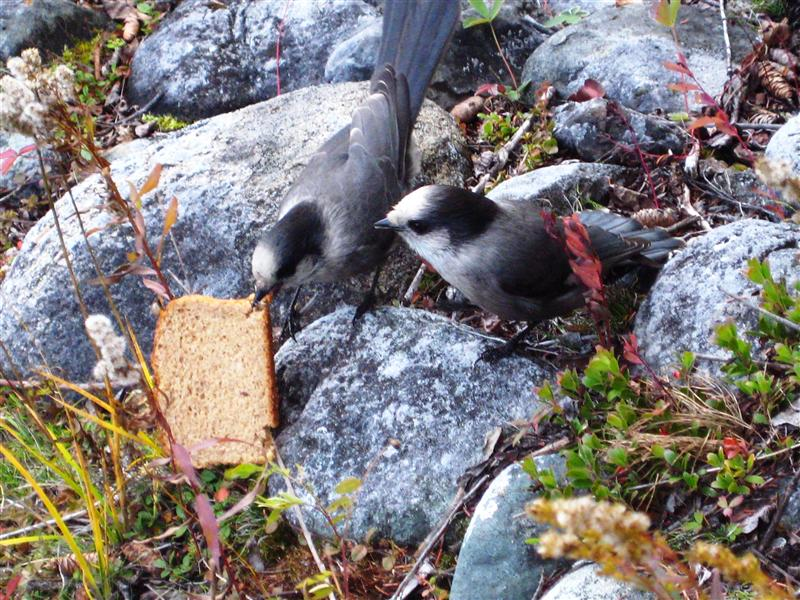 Two little fearless birds stealing our bread!