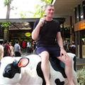 Robert is riding a plastic cow.
