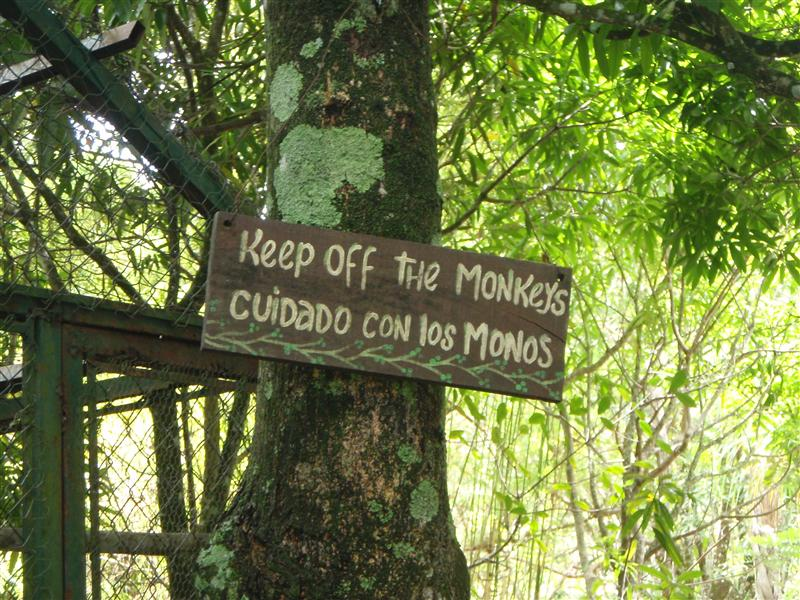 "In Spanish, it actually says ""Be careful of the monkeys"""