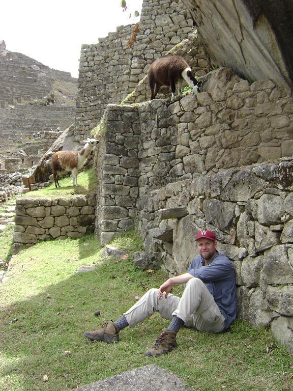 Chillin´ with llamas at Machu Picchu