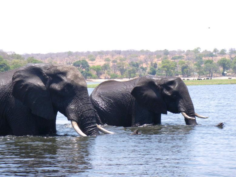 Photo tagged Botswana